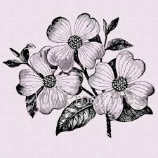 dogwood tattoos - Google Search