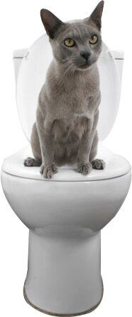 Litter Kwitter Cat Toilet Training System & Reviews | Wayfair Cat Toilet Training, Litter Box Covers, Litter Box Enclosure, Train System, Cat Room, Good Morning Greetings, Cat Accessories, Fur Babies, Pets