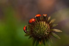 "Ladybug March-""Behold what manner of love the Father hath bestowed upon us, that we should be called the sons of God."" What a value this places upon man!"