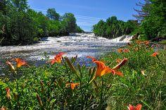 Les magnifiques chutes de la Nicolet au Parc Marie-Victorin Kingsey Falls(crédit: Serge Pilon) by Parc Marie-Victorin, via Flickr River, Outdoor, Image, Fall Of Man, Park, Outdoors, Outdoor Games, The Great Outdoors, Rivers