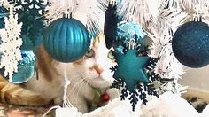 うちの猫はクリスマスツリーを倒すのか♥♥猫との会話を楽しむ動画 Conversation with a talking cat