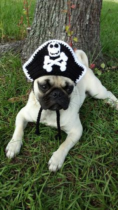 Pirate Hat for Cats Pirate Hat for Dogs  by iheartneedlework   #pirate cat hat #pirate dog hat