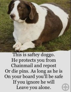 Take good care of this doggo. He is so cute! Cute Funny Animals, Cute Baby Animals, Funny Cute, Haha Funny, Hilarious, Stupid Funny Memes, Funny Relatable Memes, Nerd Memes, Cute Puppies