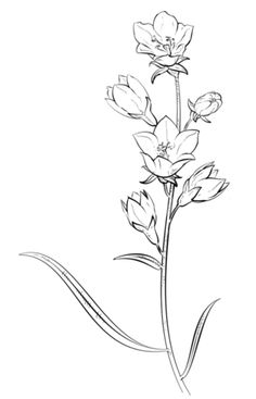 Bell Flower coloring page from Bellflower category. Select from 25105 printable crafts of cartoons, nature, animals, Bible and many more.