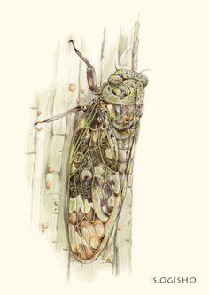 ニイニイゼミ Pictures Of Insects, Pictures To Draw, Animals, Color, Animales, Colour, Animaux, Animais, Colors