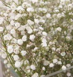 Wedding Bouquet from the garden...  Baby's breath  Gypsophila
