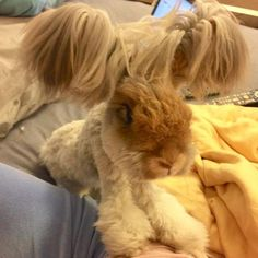 Yes, This Impossibly Adorable Rabbit Actually Exists Wally the Angora