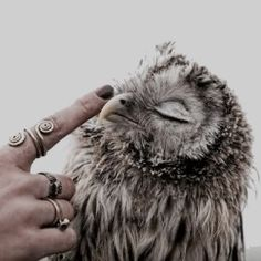 "Her voice was soft, full of awe. ""Thank you"" With one finger she stroked the little owl's beak. It closed its eyes and clicked happily, nuzzling her finger."