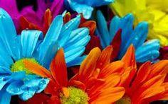 bright colors -