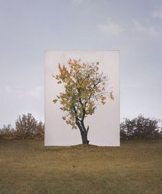 Photographer Myoung Ho Lee used large cranes to lift huge white canvases behind isolated trees he found in the wild. He did this in different seasons and in different times of the day. http://petapixel.com/2013/08/02/photographs-of-outdoor-trees-framed-by-giant-white-canvases/