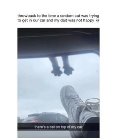 Funny Animal Jokes, Cute Funny Animals, Animal Memes, Funny Dogs, Cute Cats, Funny Animal Videos, Funny Animal Pictures, Cute Stories, Cute Little Animals