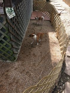 Build an outdoor dog potty area and save your grass from urine burn.