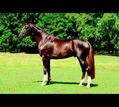 Elite Stallions: Single Stallion Page. Floriscount