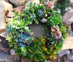 What a wonderful idea!! DIY Kit Everything You Need to  Make Your Own by SucculentDESIGNS