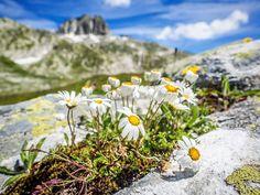 Puh! Nachdem der Sommer bislang temperaturmässig sehr angenehm war, ist es nun richtig heiß geworden 🔥 ⠀⠀⠀⠀⠀⠀⠀⠀⠀⠀⠀⠀⠀⠀⠀⠀⠀⠀⠀⠀⠀⠀⠀⠀⠀⠀⠀⠀⠀⠀⠀⠀⠀⠀⠀⠀⠀⠀⠀⠀⠀⠀⠀⠀⠀⠀⠀⠀⠀⠀ Bei dieser Hitze bleibt nur eins: ab nach oben🚠! Auf Höhen von über 2000 m.ü.M. ist es auch jetzt schön kühl. ⠀⠀⠀⠀⠀⠀⠀⠀⠀⠀⠀⠀⠀⠀⠀⠀⠀⠀⠀⠀⠀⠀⠀⠀⠀⠀⠀⠀⠀⠀⠀⠀⠀⠀⠀⠀⠀⠀⠀⠀⠀⠀⠀⠀⠀⠀⠀⠀⠀⠀ Und schöne Blümchen 🌸 gibt es auch, denn dort oben kommt der Frühling etwas später. Zermatt, Grindelwald, Abs, Mountains, Nature, Plants, Travel, Swiss Alps, Naturaleza