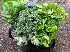 Leafy Green Vegetables: Studies have shown that a high intake of dark-leafy vegetables, such as spinach or cabbage may significantly lower a person's risk of developing diabetes type 2.