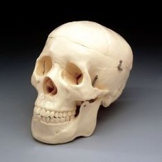 Budget Life-Size Skull #skull #human  http://www.InTheWind.org