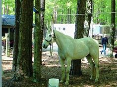 Learn more about what you need to take on a horse-camping trip and how to leave no trace when youre done camping.