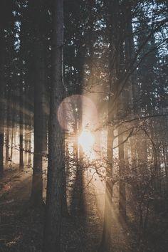 Landscape Photography Forest flares | by Ju On Source: lvndscpe