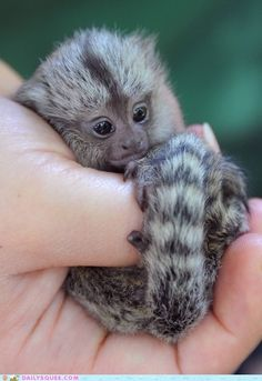 baby animals mommy can I have one please!! Sure only because u asked Nicely though