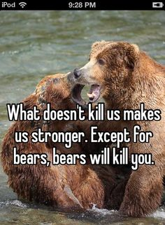 Bears aint nothin to fuck wit