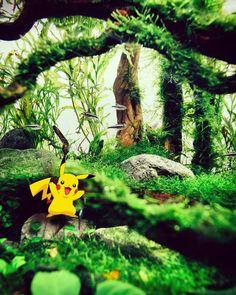 Pokemon Invasión
