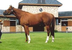 Arazi(1989)Blushing Groom- Danseur Fabuleux By Northern Dancer. 3x4 To Wild Risk, 4x4 To Nearco, 4x5 To Native Dancer. 14 Starts 9 Wins 1 Second 1 Third. $1,213,307. Won 1991 BC Juvenile(G1). U.S. And Europe 2 YO Champion And Europe Horse Of The Year In 1991.