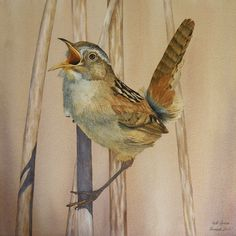 Photorealist watercolor painting of a smal wren singing his bird song