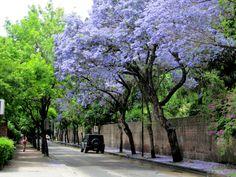 Beccar. Buenos Aires