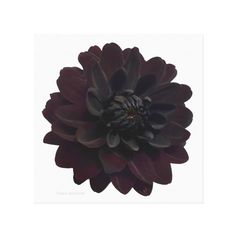 Modern Floral Black Dahlia Flower Canvas Print (€150) ❤ liked on Polyvore featuring home, home decor, wall art, black home decor, floral home decor, modern home decor, black home accessories and mod home decor