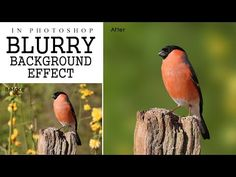 How to blur background in photoshop CS6 - tilt shift effect in photoshop - YouTube