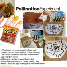 pollination experiment.  Place cheetos (maybe doritos or other chips too) in different bags and have kids reach in and grab one chip from several brown bags of chips without licking, washing, or wiping their hands.  At the end have them wipe their hands on a paper flower (white) to see how pollination spreads.
