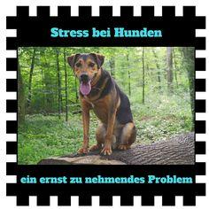 Stress belastet nicht nur uns Menschen - auch für unsere Hunde kann er ein großes Problem sein