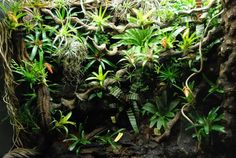 One can never have too many Bromeliads...