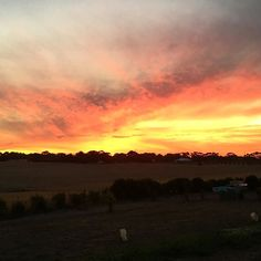 Absolutely stunning sunset tonight @happylittlefarm looked like the sky was on fire #nofilters#sunset#warrnambool#visitwarrnambool by happylittlefarm
