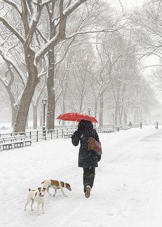 Central Park, snow, winter, New York City  NYC.  By Ellen McKnight.