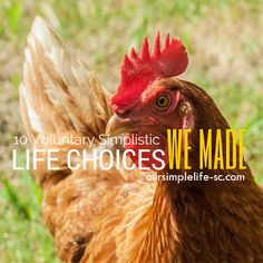 10 Voluntary Simplistic Life Choices - Many thought when we chose to change our life we choose a life of poverty. That is the furthest from the tr! oursimplelife-sc.com #simpleliving