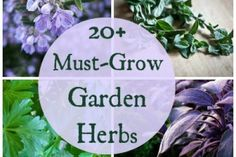 Must-Grow Kitchen Garden Herb Plants – The Ultimate Growing Guide Index
