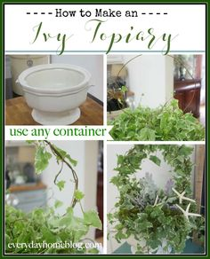 This simple tutorial shows you how to Make an Ivy Topiary using any pot or container you desire. | The Everyday Home | www.everydayhomeblog.com