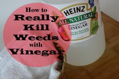 Don't Spend Money on Overpriced name Brands- Just go to your kitchen cabinet instead ! How to REALLY KILL Your Weeds With Vinegar !!!