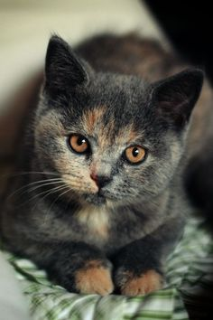 Cat XXIII by Edek.deviantart.com on @deviantART: Kitty Cats Animals Sweet Beautiful Cats Pretty Cat Kittens Chat Feline Eye #PersianCat