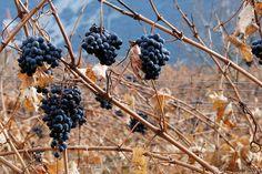 11 Best Top Ten Wine Destinations In The World Images