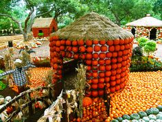 The Dallas Arboretum, Arboretum, Pumpkin Village, Pumpkin, Fall at the Arboretum, Autumn at the Arboretum, Dallas, Autumn