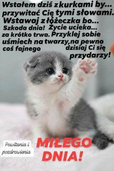 Nick Vujicic, Weekend Humor, Beautiful Love Pictures, Lemur, Cats, Fun, Animals, Virgin Mary, Good Morning