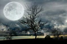 Fantasías (3) para una noche mágica