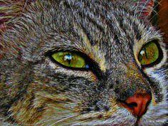 photos montage 2012 - 109567308870851035676 - Picasa Albums Web