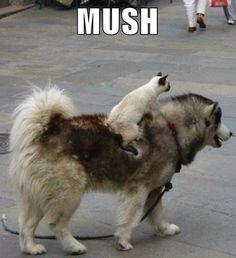 When Cats Ride Dogs, Everything Seems Right With The World