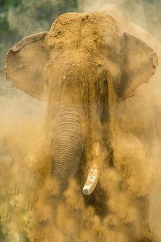 Elephant by Håkan Liljenberg