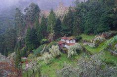 Ribeiro Frio, Madeira.