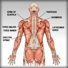 Upper back exercises for beginners